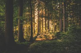 Forêt2019 - joint Session of the ECE Committee on Forests and the Forest Industry and the FAO European Forestry Commission